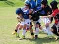 youngwave_kitakyusyu_rugby_school_chikuhokouryu2016127.JPG